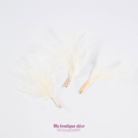 plumes écru